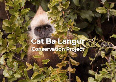 Cat Ba Langur Conservation Project