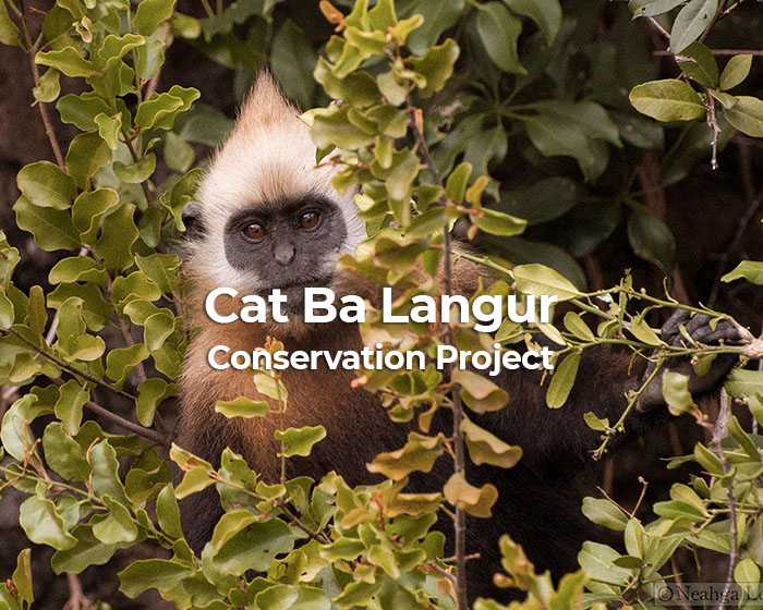 Cat Ba Langur Conservation Project