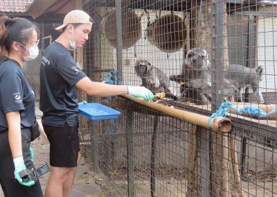 FNPF friends of the national parks volunteer Feeding the animals, monkey Bali
