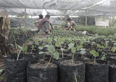 Friends of the national Parks planting trees on borneo poly bags