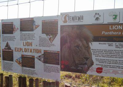 Tenikwa visitor educational work lion exploitation