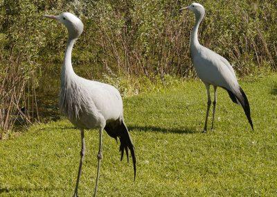 Tenikwa wildlife birds