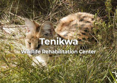 Tenikwa Wildlife Rehabilitation Centre