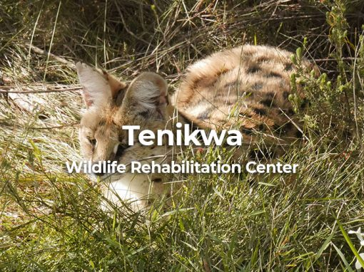 Tenikwa Wildlife Rehabilitation Centre