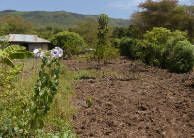 Vegetable garden - permaculture to be overflow spring of hope