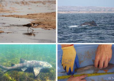 marine conservation maio birds sharks whales
