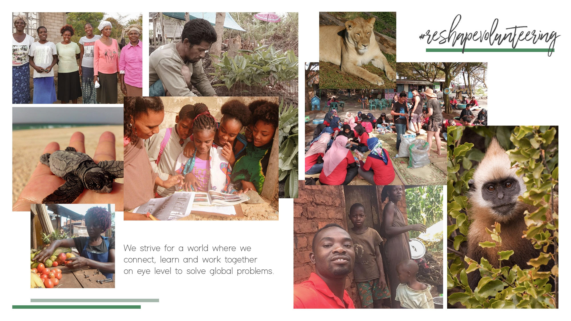support give and grow reshape volunteering header collage with project pictures